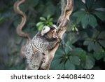 marmoset monkey on branch of...