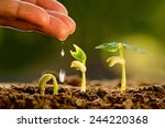 agriculture and seedling... | Shutterstock . vector #244220368