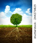 section in soil showing the...   Shutterstock . vector #244273825