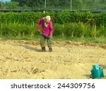 Small photo of A man scarify the soil in plantation amidst the strong sunlight.