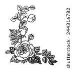 hand drawn rose flowers...   Shutterstock .eps vector #244316782