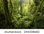 beautiful  dense vegetation... | Shutterstock . vector #244338682
