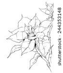 Christmas Poinsettia Plant  ...