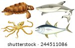 different sea creatures on a... | Shutterstock .eps vector #244511086