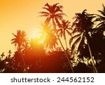 Tropical Background With Palm...