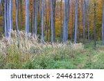 amazing wood trunk sunset... | Shutterstock . vector #244612372