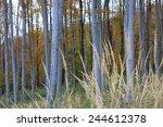 amazing wood trunk sunset... | Shutterstock . vector #244612378