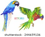 exotic birds drawn by hand | Shutterstock . vector #244659136