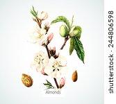 vector watercolor almonds.... | Shutterstock .eps vector #244806598