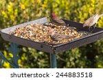 Platform Bird Feeders Are...