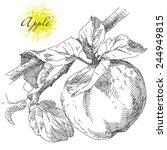 hand drawing apple on apple... | Shutterstock .eps vector #244949815