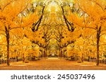 central park autumn in midtown... | Shutterstock . vector #245037496