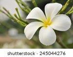 One Flower In My Garden