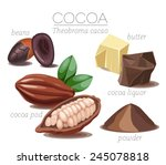 super food cocoa beans. pod ... | Shutterstock .eps vector #245078818