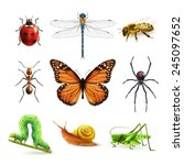 insects realistic colored... | Shutterstock .eps vector #245097652