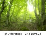 sunshine in the green forest | Shutterstock . vector #245109625