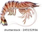 Tiger Prawn. Raster Image On...