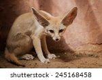bat eared fox cubs  otocyon... | Shutterstock . vector #245168458