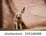 bat eared fox cubs  otocyon... | Shutterstock . vector #245168488