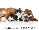 Stock photo close up cat and dog together lying on the floor 245175502