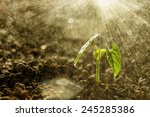 Green Seedling Growing On The...