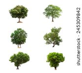 trees collection isolated on... | Shutterstock . vector #245309842