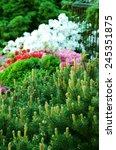 garden arrangement with... | Shutterstock . vector #245351875