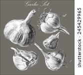 illustration with garlic. hand... | Shutterstock .eps vector #245429965