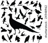 birds vector | Shutterstock .eps vector #24548962