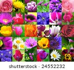 colorful floral collage  ... | Shutterstock . vector #24552232