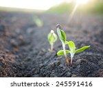 green plants seedling | Shutterstock . vector #245591416