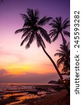 palm tree silhouette on sunset... | Shutterstock . vector #245593282