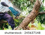 Woodman uses his chainsaw cut the tree. Deforestation and Its Extreme Effect on Global Warming - stock photo