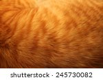 Image Of Ginger Cat's Fur...