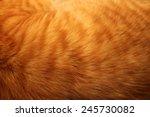 Image Of Ginger Cat's Fur...