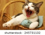A Housecat Yawns Shortly After...