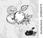 hand drawn decorative apple... | Shutterstock .eps vector #245865475