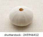 Sea Urchin Skull On The Weave...