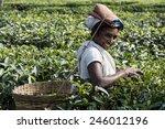 india  assam   november  2014 ... | Shutterstock . vector #246012196