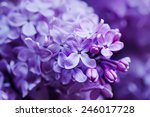 macro image of spring lilac... | Shutterstock . vector #246017728