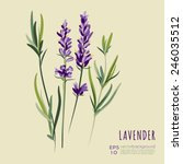 lavender bouquet greeting card... | Shutterstock .eps vector #246035512