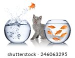 Stock photo astonished cat watches impossible fish jump 246063295