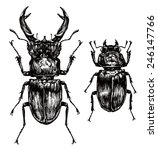 Illustration Of Stag Beetles O...