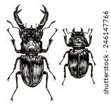 Illustration Of Stag Beetles O...