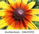 blackeyed susan oil on canvas... | Shutterstock . vector #24615352