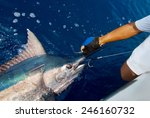 Catching Marlin Big Game Sport...