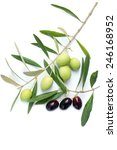 olive branch | Shutterstock . vector #246168952