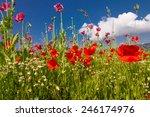 corn poppy  corn rose  papaver... | Shutterstock . vector #246174976