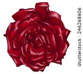 a red rose vector on white... | Shutterstock .eps vector #246268606