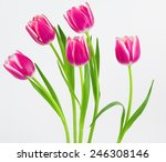 close up of five fuchsia pink... | Shutterstock . vector #246308146